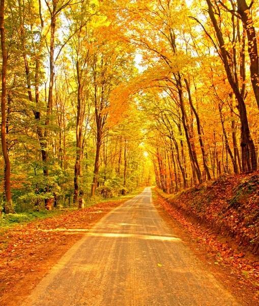 zol素材 高清图片 风景图片 秋天枫叶小路图片下载