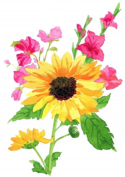 向日葵彩绘高清图片-zol素材下载